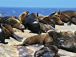 The seal island colony at Duiker Island