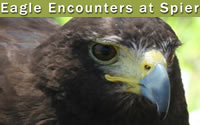 Eagle Encounters at Spier, Stellenbosch