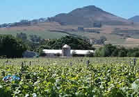 Wine Farms in Greater Simonsberg, South African Wine Making areas
